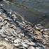 На Днепропетровщине снова мрёт рыба