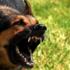 Горожанин, защищая животных, стрелял в людей