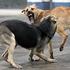 В каких районах города будет проводиться отлов бездомных собак?